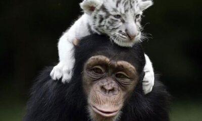 Dünyanın Berbat Olduğunu Düşünüyorsanız, Bu 50 Hayvan Arkadaşlığı Fikrinizi Değiştirebilir