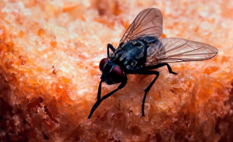 Elektrikli Sineklik İle Böcek Kovalarken Evini Havaya Uçurdu