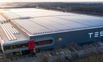 Kertenkeleler Tesla'nın Gigafactory Planlarını Engelliyor