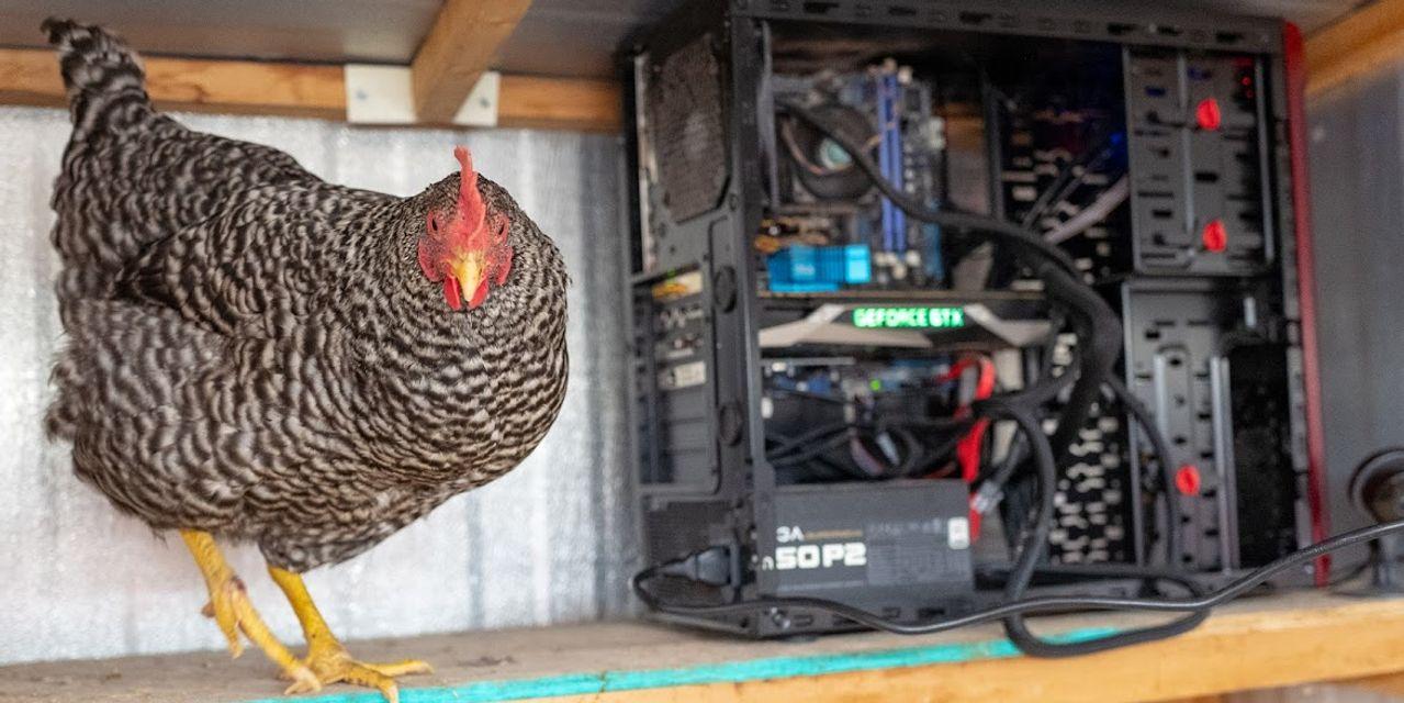 Bitcoin Madencileri Ekipmanlarıyla Tavuk Kümeslerini Isıtıyor